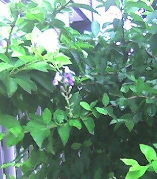foto 04 - florencio batista
