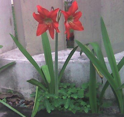 foto02 - florencio batista