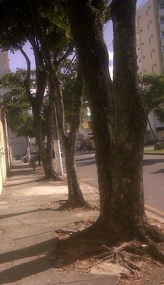 jardim-rua-filogonio-motta-30052010-a