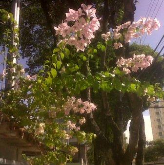 jardim-rua-filogonio-motta-30052010-b