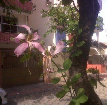 jardim-rua-joao-de-oliveira-soares-30052010-a