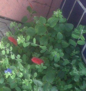 jardim-rua-joao-de-oliveira-soares-30052010-b