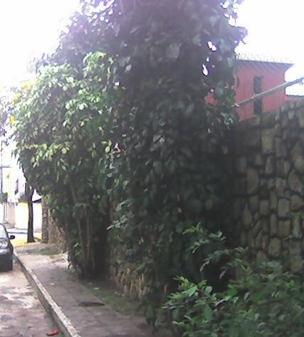 ruapedrobusatto3a