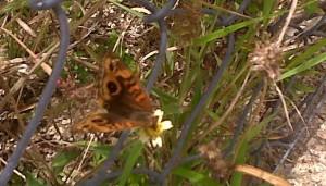 IMG00826-20110126-borboleta