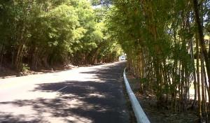 IMG00922-20110130-Camburi2